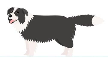 how to create dog legs