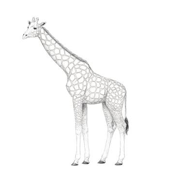 draw giraffe pattern