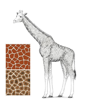how to draw a giraffe step by step