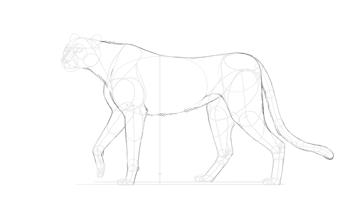 outline cheetah body