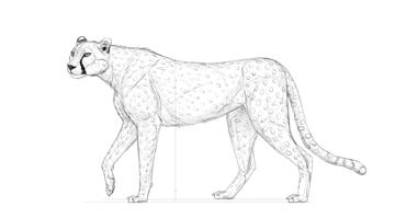 plan cheetah pattern