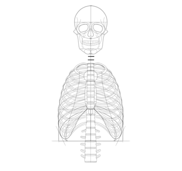 divide neck into vertebrae