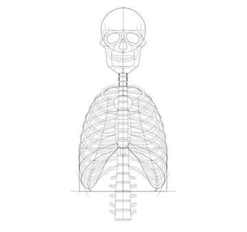 draw neck vertebrae shape