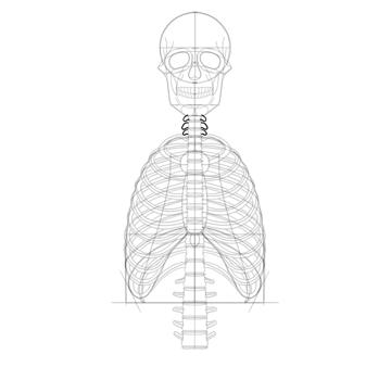 draw full neck vertebrae