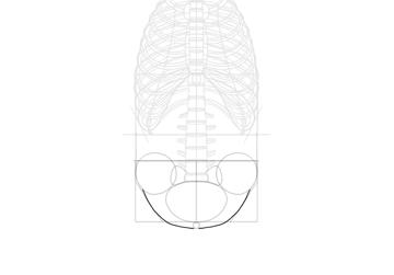 simplified pelvis roundness