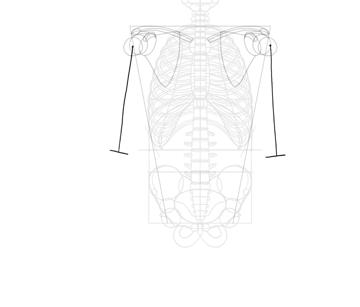 length of humerus