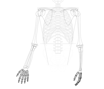 finger bones outlined