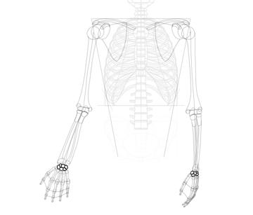 simplified wrist bones