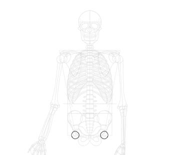 simplified head of femur
