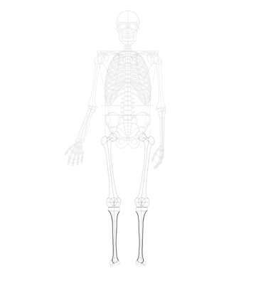 tibia outlined