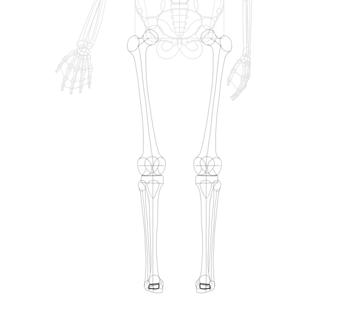 simple ankle bones