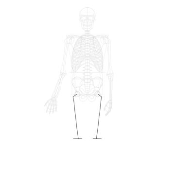 length of femur