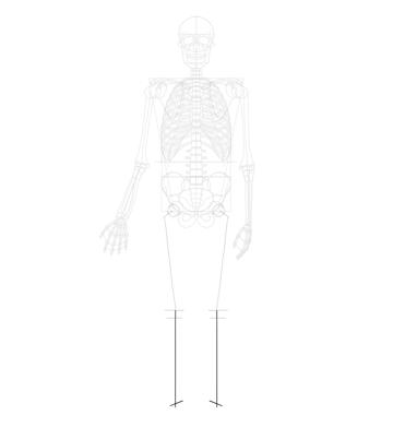 tibia length