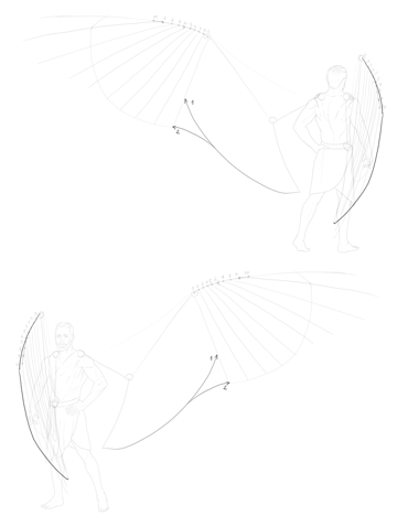 curve of secondary feathers