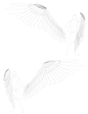 alula shape of feathers