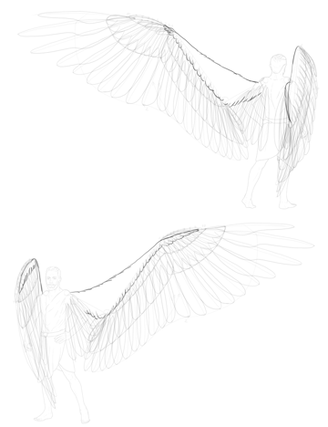 tiny covert feathers