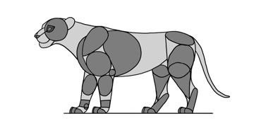 lion king characters anatomy