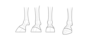 how to draw dinsey horse hooves