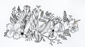 shade flowers