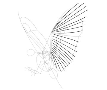 hawk feathers position