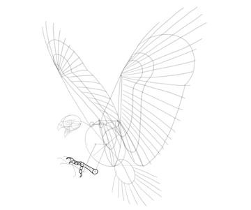 hawk left talons details
