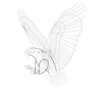 hawk outline of body