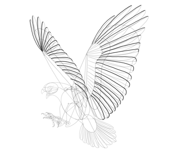 hawk big feathers drawing
