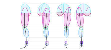 anime legs