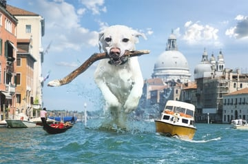 giant dog photo manipulation photoshop
