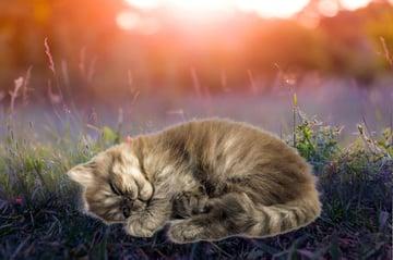 paste cat into photo