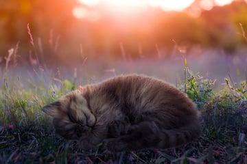 make kitten warmer