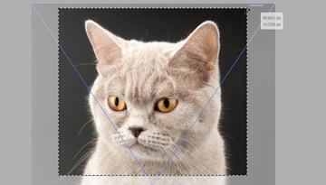 crop photo in illustrator
