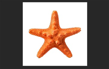 starfish selected