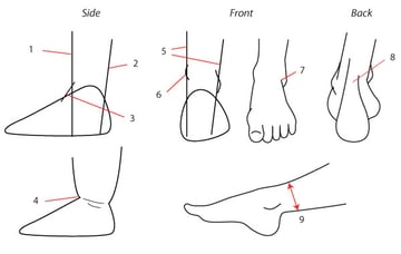 Details of the ankle