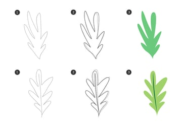 Trace the herb leaves