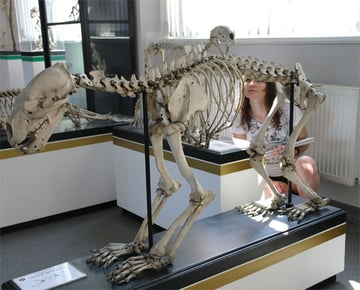 Monika in the Natural Museum of History
