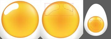 Further define details of the egg yolk