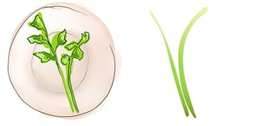 Draw two stems for each parsley