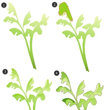 Draw and render leaves