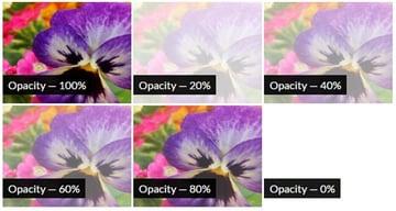 CSS Opacity Filter Effect