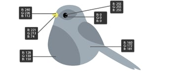 creating another bird by changing the fill colors