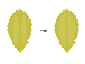 creating the leaf 2
