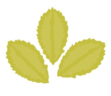 creating two more leaves