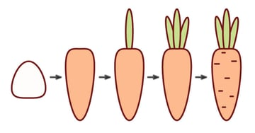 creating the carrot
