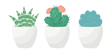 placing together all the succulents