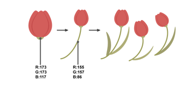 how to create the whole tulip