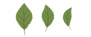 all leaves together