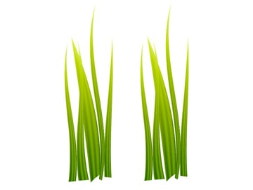 Created a copy of the grass