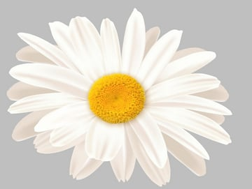 add daisy middle