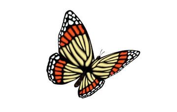 vector butterfly tutorial